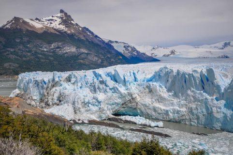 calafate-patagonia